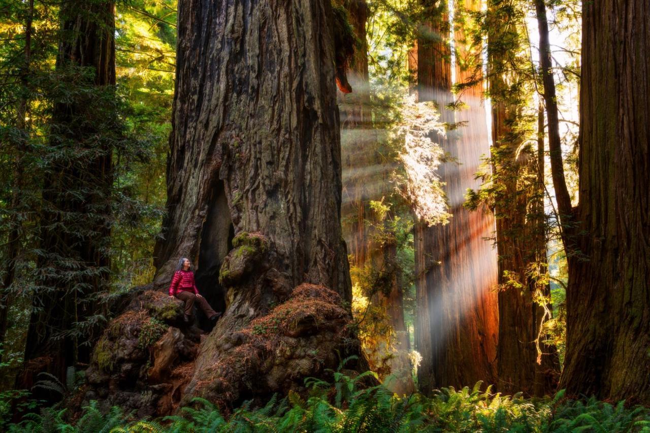 Los parques nacionales y estatales de los Redwoods